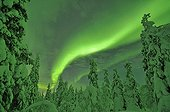 Aurora borealis over taiga covered with snow Finland
