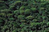 Forêt primaire de l'île Silhouette aux Seychelles