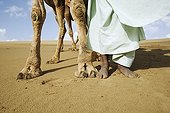 Camel and human feet in the Great Thar desert Rajasthan