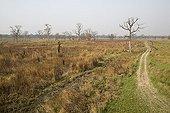 Prairie and trees burnt Dudhwa National Park India