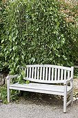 Bench in teak and mulberry tree in a garden