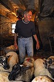 Berger preparing to mow his Sheeps Auvergne France