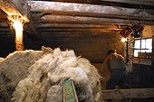 Wool stored in a sheepfold  Auvergne France