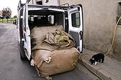 Loading bags of wool in a truck  Auvergne France