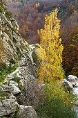 Fall colors in Monts d'Ardèche National Park France