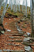 Stone stairs in Ardèchemounts
