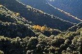 Autumn in Monts d'Ardèche National Park France