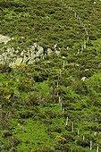 Fence through broom Monts d'Ardèche NP France