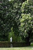 Stone statue under Bush's Chestnuts blooming Bourgogne