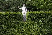 Stone statue behind an Hornbeam hedge Cormatin