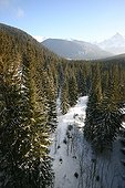 Spruce forests covered with snow Hautes Tatras Slovakia