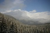 Spruce forests covered with snow in High Tatras Slovakia