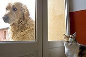 Cat inside and Dog outside a house France