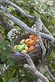 Easter eggs in nest in the garden