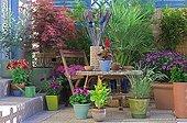 European fan palm on a flowered garden terrace