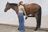Séance d'ostéopathie sur un Cheval selle français