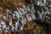 Crystals of Wavellite Trenice Czech Republic ; @ Wavellite