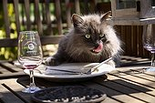 Cat licking a plate France