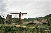 Man carrying trunks cut Tau't Batu PalawanPhilippines ; Date: February and June 2006 <br/> Ethnic Taut'Batu is known that since 1978, had its discovery stunned the scientific world. Living in the forest relic of the southern island of Palawan, they live in the typhoon shelter in caves during the rainy season. During the summer, they are building houses on stilts and practice slash and burn.<br/> This animist culture shared by 200 to 300 people is threatened by deforestation.