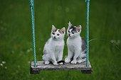 Kittens sitting on a wooden swing France