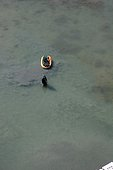 Clam fisherman and its rowing boat Morbihan France