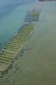 Big oyster park in the Morbihan's gulf France