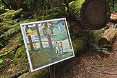 Information panel on forestry management of a forest ; Location: Cathedral Grove Forest.