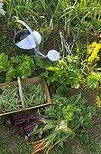 Gardening in the gardens in July in Belfort