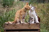 A moment of tenderness between Cats sat on a wooden box
