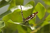 Butterfly in the bush in the spring Var