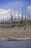 Forest fire on Mackenzie riverbank Canada