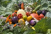 Composition of old and forgotten vegetables