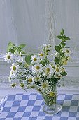 Bouquet of Disc mayweeds and Honeysuckle in a vase France