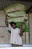Porter bags of tea leaves Tea Factory Sri Lanka