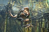 """European frogs mating and lay Lake of JuraFrance ; Feature: """"A fleur d'eau"""""""