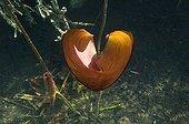 "Heart  Water Lily Lake of Jura France ; Feature: ""A fleur d'eau"""