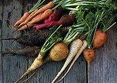 Harvest of vegetables on a garden table