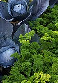Curly parsley and red cabbage