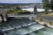 Salmon ladder on Colombia river Oregon United States ; The ladder allow Salmons to cross the electric dam.