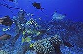 Diver feeding fishes Polynesia Moorea