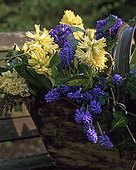 Bouquet of Hyacinth and Muscari in spring