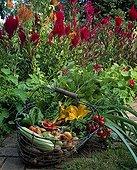 Basket of different vegetables in summer ; 'Ratte' Irish potato