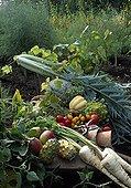 Autumn vegetables in a vegetable garden