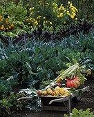 Autumn vegetables in St-Jean-de-Beauregard garden