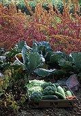 Basket of autumn vegetables