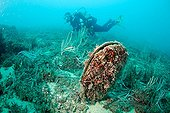 Pen Shell and diver Medes Islands Spain