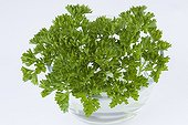 Sprigs of curly parsley in a cup filled with water