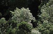 Forêt tempérée de feuillus au printemps France