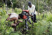 """Kanaks digging with a drill New Caledonia ; Reforestation program in a savannah Niaouli. The """"Savannah"""" is a facies of recolonization replacing patches of rainforest burned."""