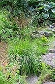 Purple moorgrass in a garden